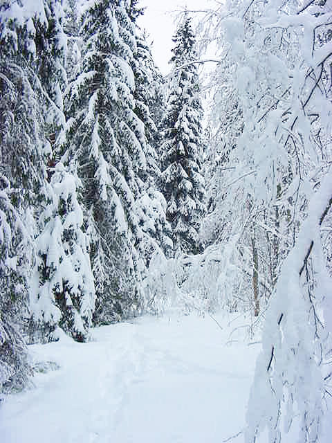 snowforestview1.jpg