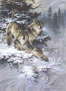wolf005.jpg