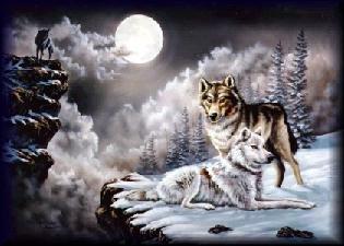 wolf025.jpg