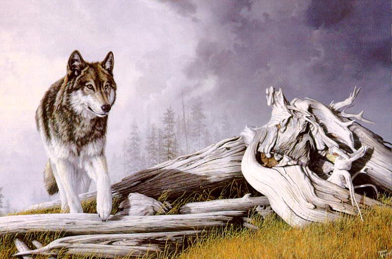 wolf121.jpg