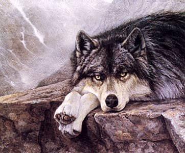 wolfontherock.jpg