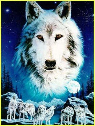 wolfspirt.jpg